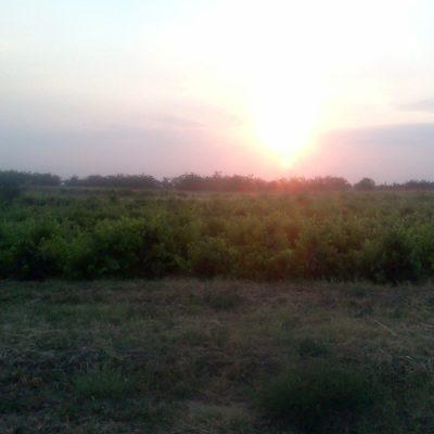 Vegetaţia comunei Poiana Mare