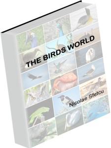 3D-Birds