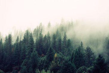 fir-trees-569047.jpg