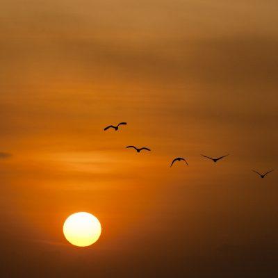 sunset-600095_1280.jpg