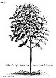 """Arborele de cafea, La Roque în lucrarea sa """"Voyage de l'Arabie Heureuse"""