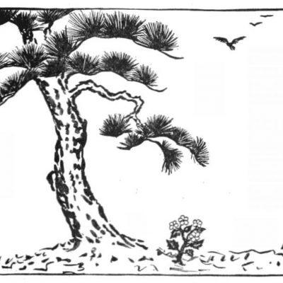 L'arbre à feuilles persistantes et le souci