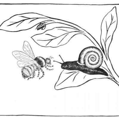 L'escargot et les abeilles
