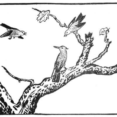 Ce que les Yen Tzi a enseigné au chasseur