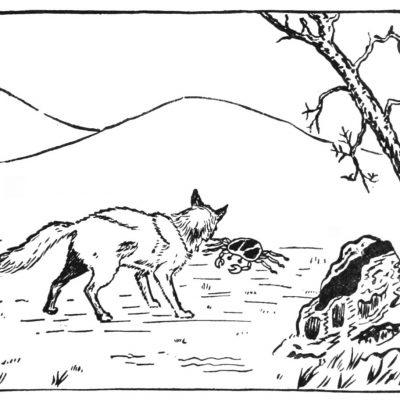Le renard fier et le crabe