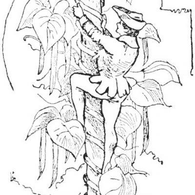 Jack și vrejul de fasole