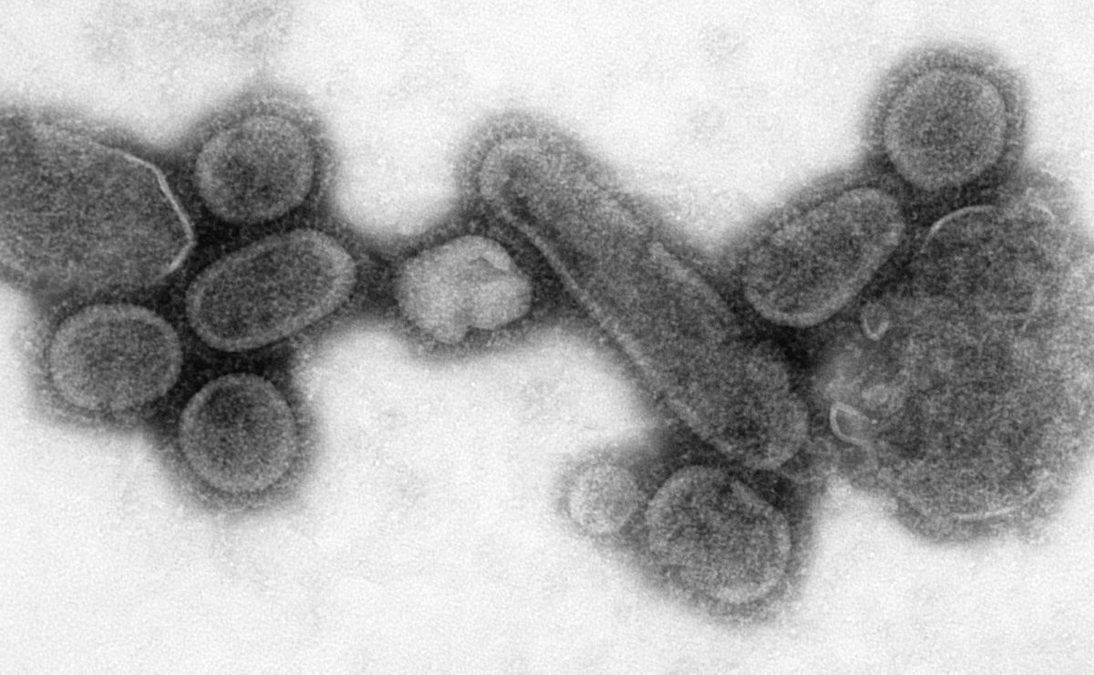 Image with electron microscope transmitting a recreated influenza virus from 1918