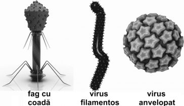 Principalele tipuri de viruși