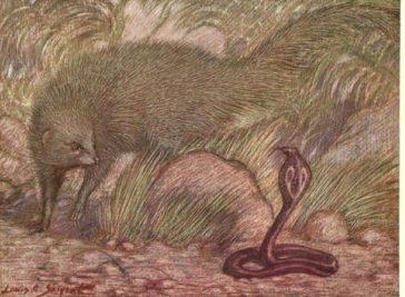 Rikki-Tikki-Tavi, de Rudyard Kipling